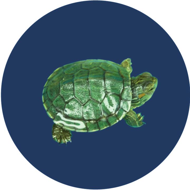 Turtle Foods